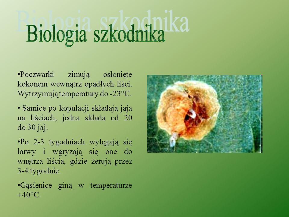 Biologia szkodnika Poczwarki zimują osłonięte kokonem wewnątrz opadłych liści. Wytrzymują temperatury do -23°C.