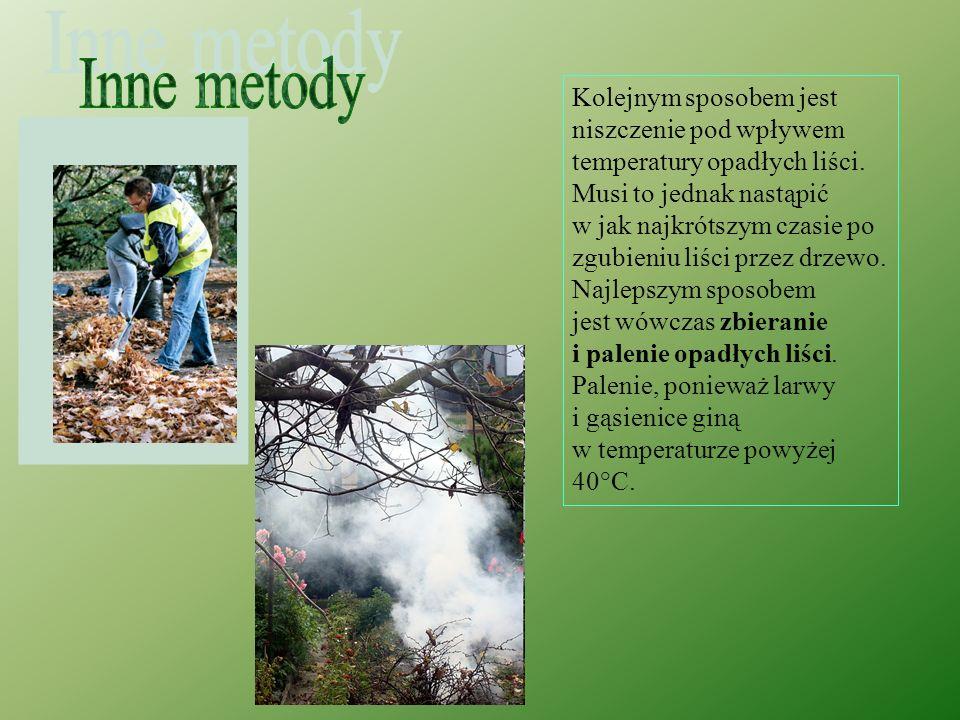 Inne metody Kolejnym sposobem jest niszczenie pod wpływem temperatury opadłych liści.