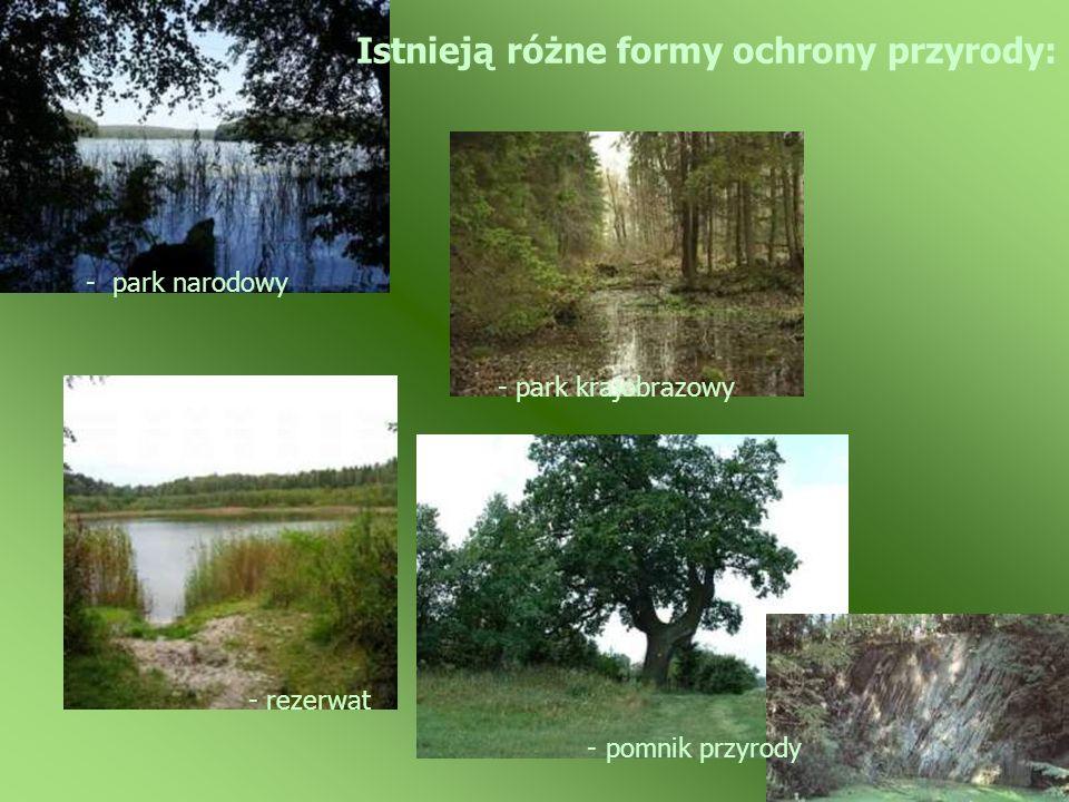 Istnieją różne formy ochrony przyrody: