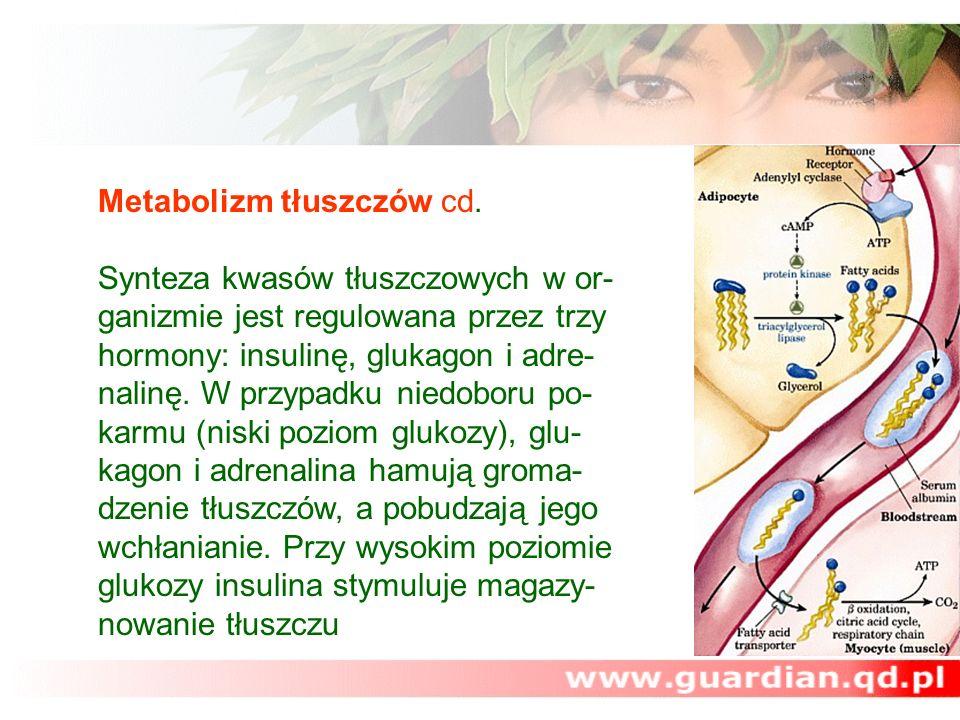 Metabolizm tłuszczów cd