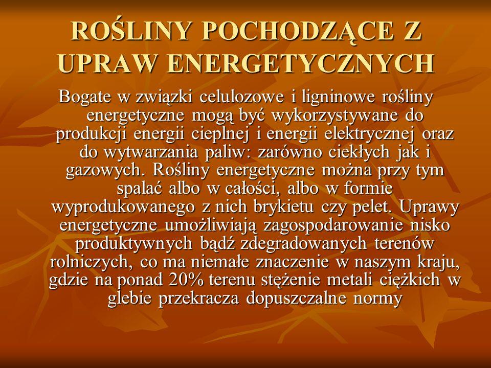 ROŚLINY POCHODZĄCE Z UPRAW ENERGETYCZNYCH