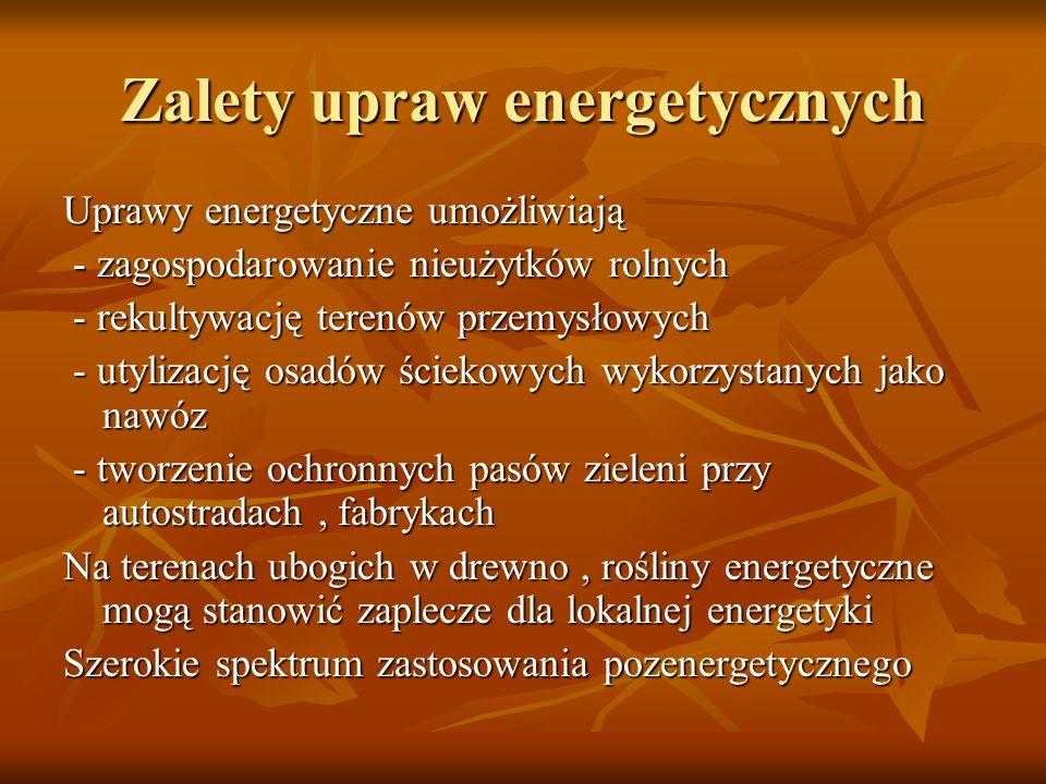 Zalety upraw energetycznych