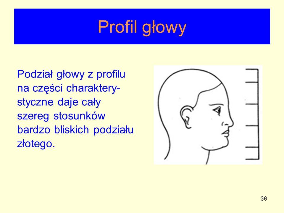 Profil głowy Podział głowy z profilu na części charaktery-styczne daje cały szereg stosunków bardzo bliskich podziału złotego.