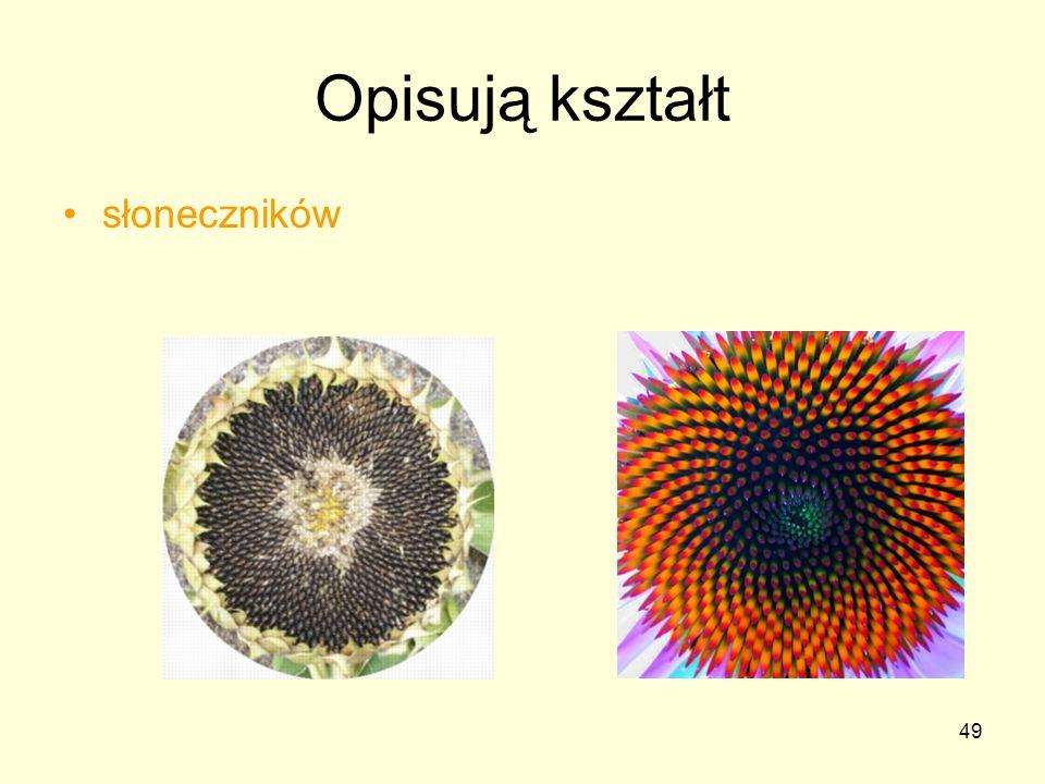 Opisują kształt słoneczników