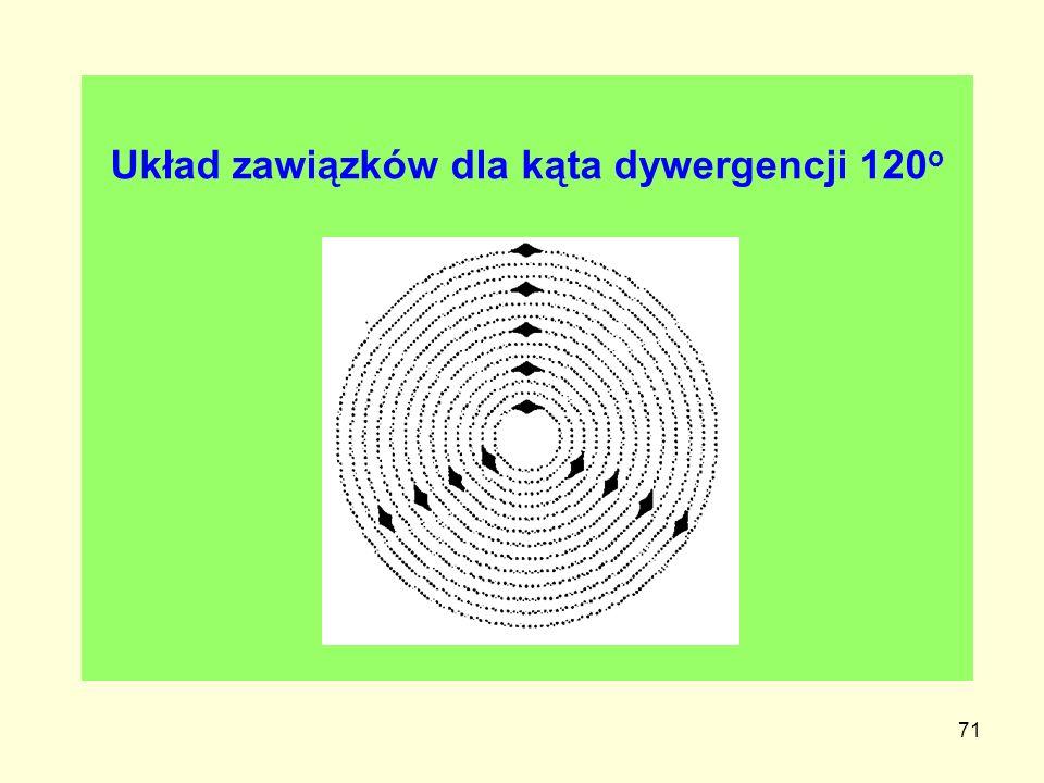 Układ zawiązków dla kąta dywergencji 120o