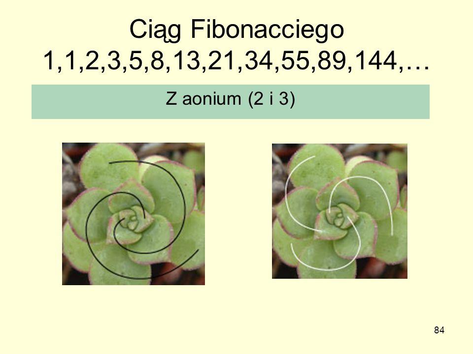 Ciąg Fibonacciego 1,1,2,3,5,8,13,21,34,55,89,144,… Z aonium (2 i 3)