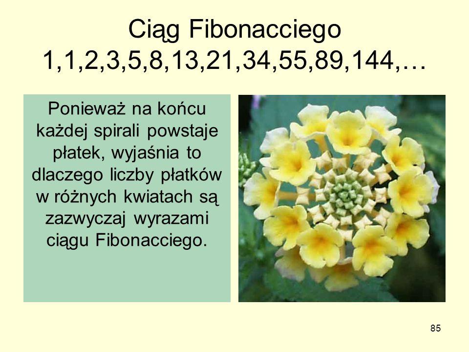 Ciąg Fibonacciego 1,1,2,3,5,8,13,21,34,55,89,144,…