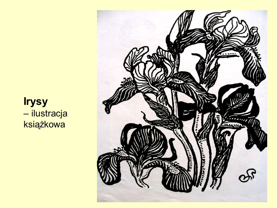 Irysy – ilustracja książkowa