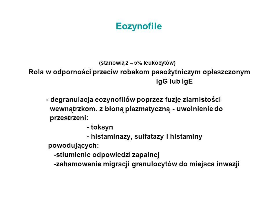 (stanowią 2 – 5% leukocytów)