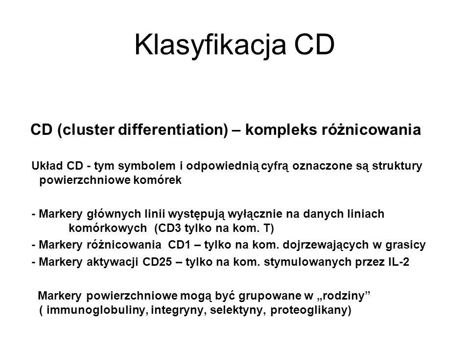 Klasyfikacja CD CD (cluster differentiation) – kompleks różnicowania