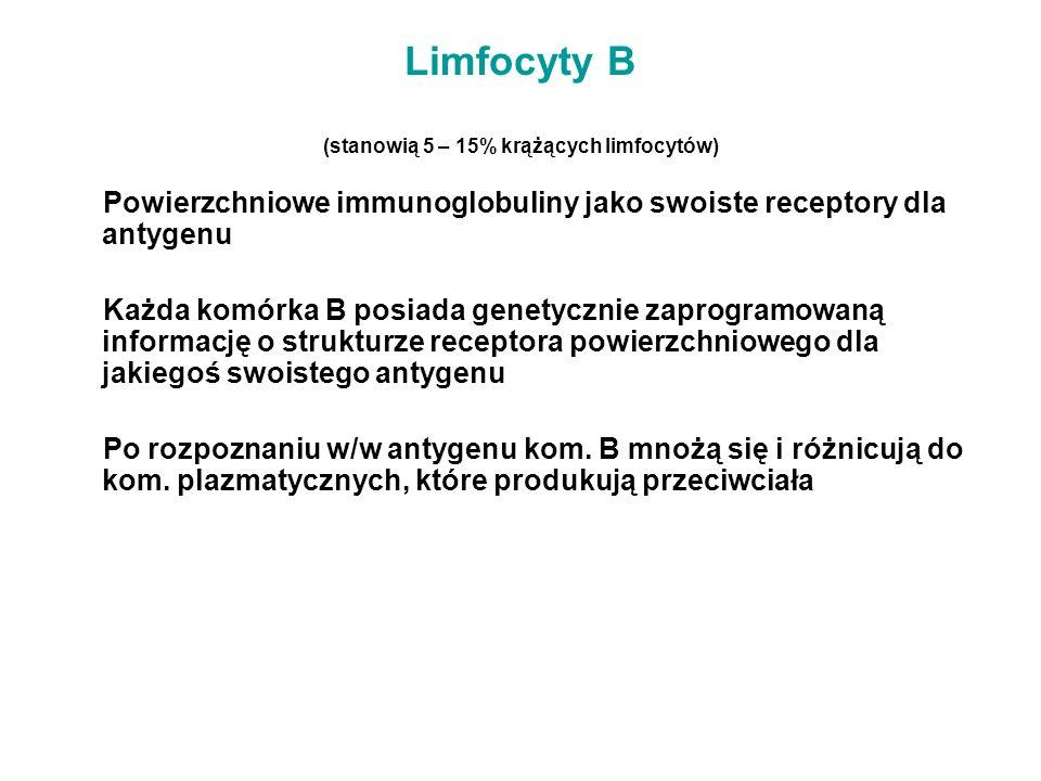 Limfocyty B (stanowią 5 – 15% krążących limfocytów)
