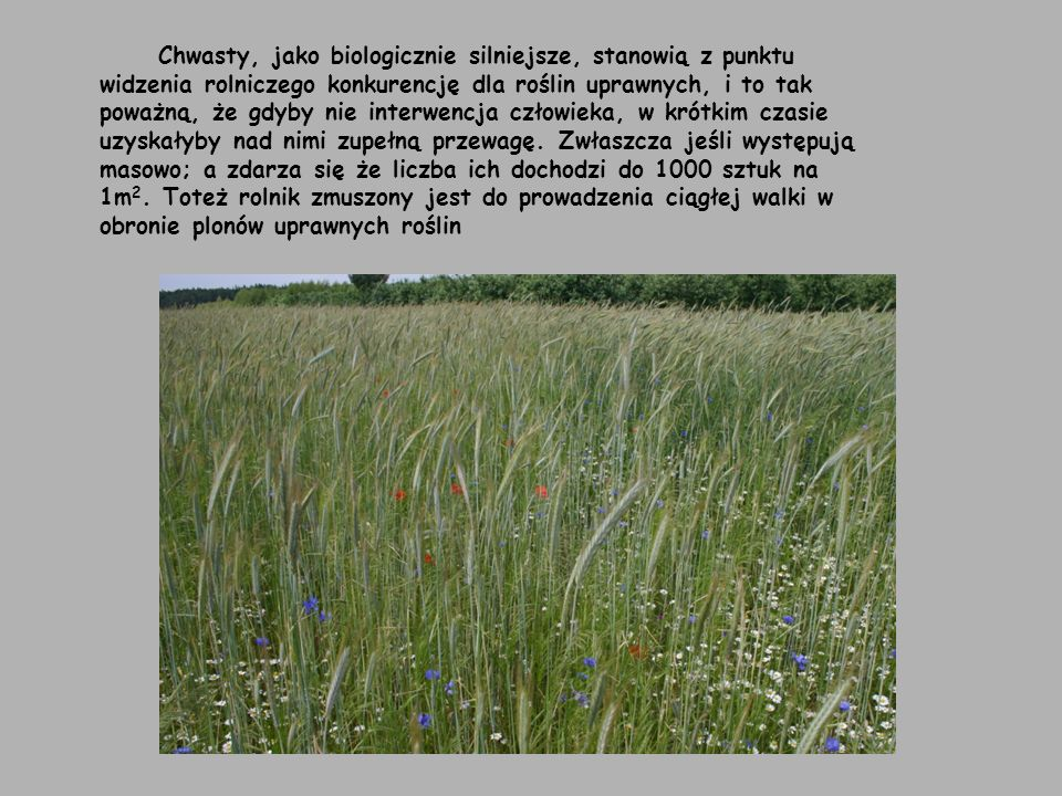 Chwasty, jako biologicznie silniejsze, stanowią z punktu widzenia rolniczego konkurencję dla roślin uprawnych, i to tak poważną, że gdyby nie interwencja człowieka, w krótkim czasie uzyskałyby nad nimi zupełną przewagę.