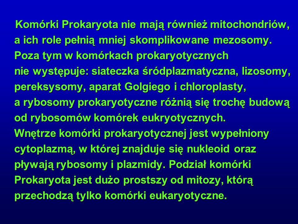 Komórki Prokaryota nie mają również mitochondriów, a ich role pełnią mniej skomplikowane mezosomy.