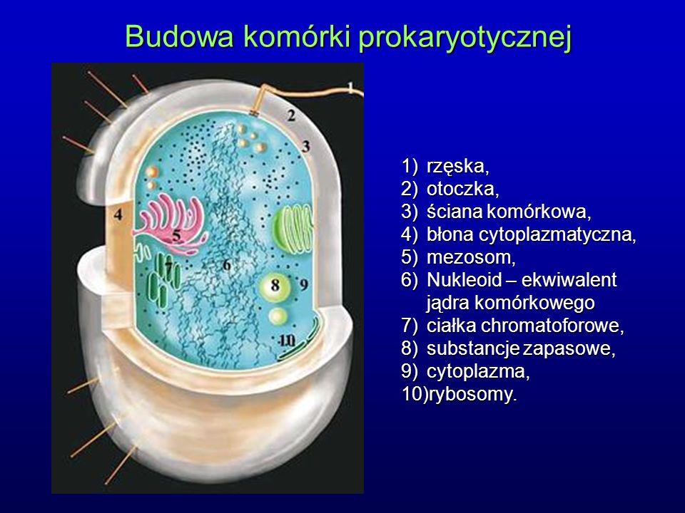 Budowa komórki prokaryotycznej