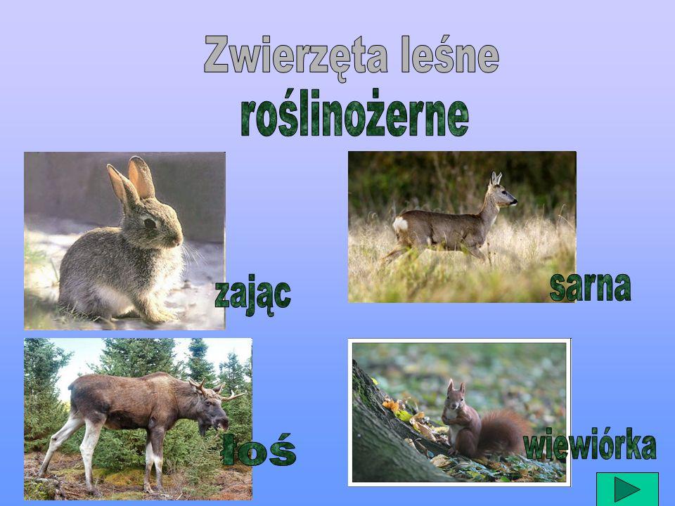 Zwierzęta leśne roślinożerne zając sarna wiewiórka łoś