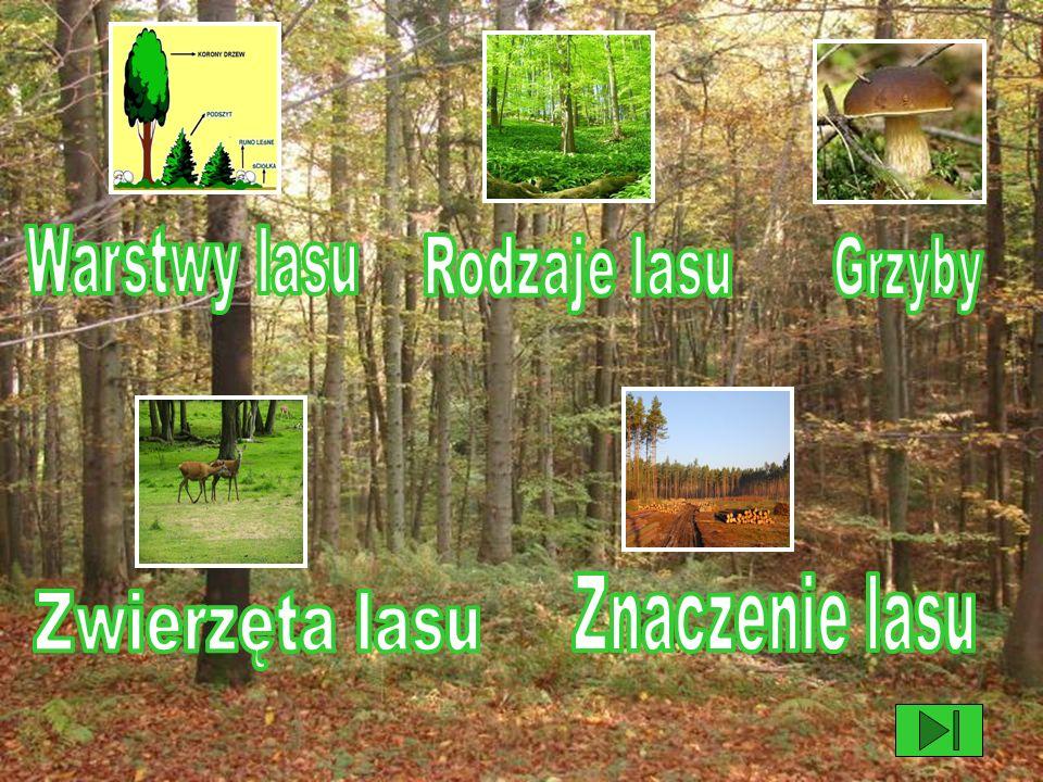 Warstwy lasu Rodzaje lasu Grzyby Znaczenie lasu Zwierzęta lasu