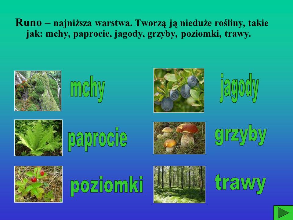 jagody mchy grzyby paprocie trawy poziomki