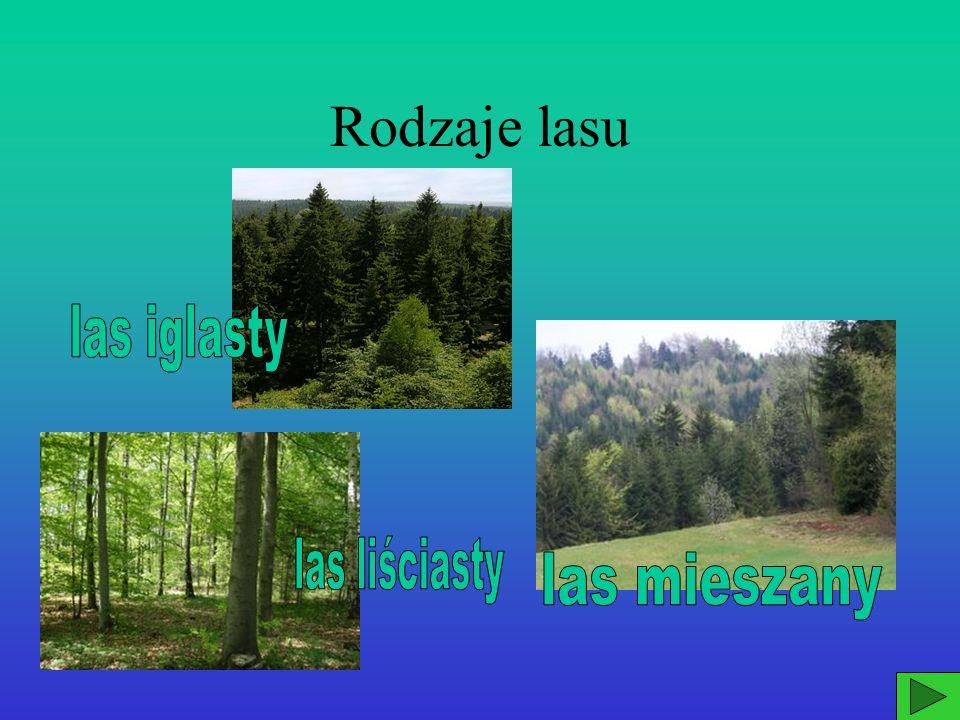 Rodzaje lasu las iglasty las liściasty las mieszany