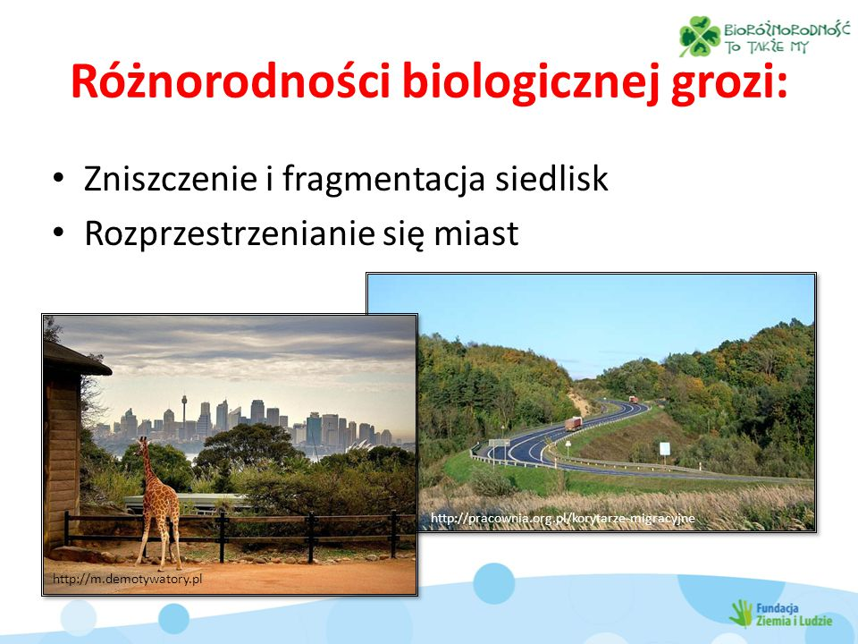 Różnorodności biologicznej grozi: