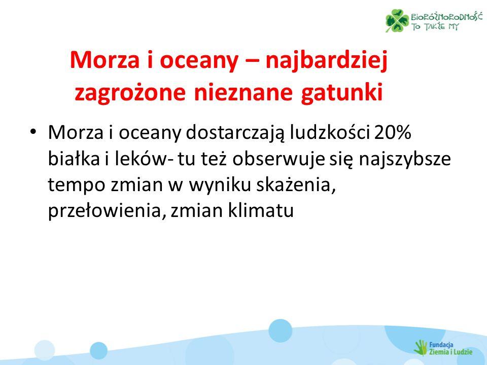 Morza i oceany – najbardziej zagrożone nieznane gatunki