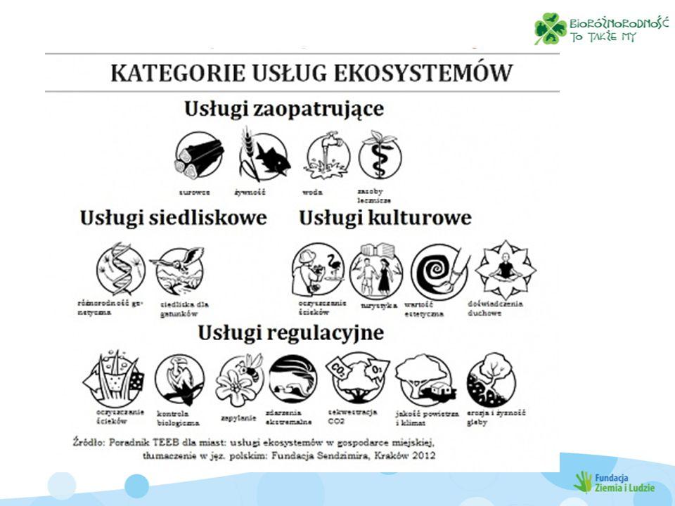 Usługi ekosystemów