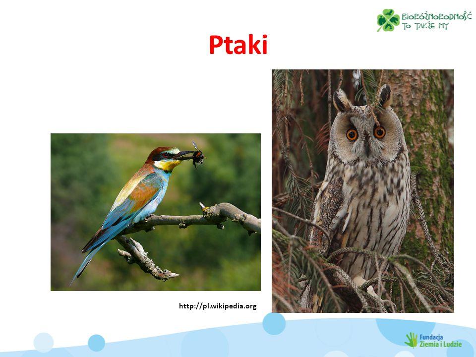 Ptaki http://pl.wikipedia.org http://pl.wikipedia.org