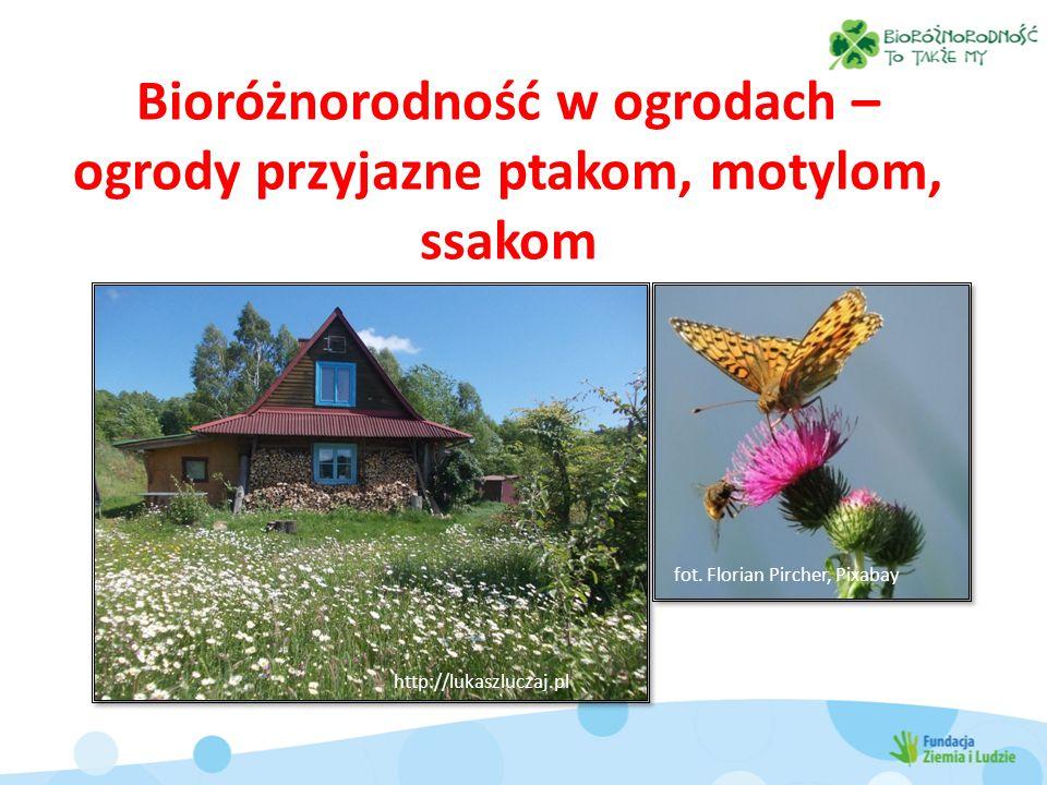 Bioróżnorodność w ogrodach – ogrody przyjazne ptakom, motylom, ssakom