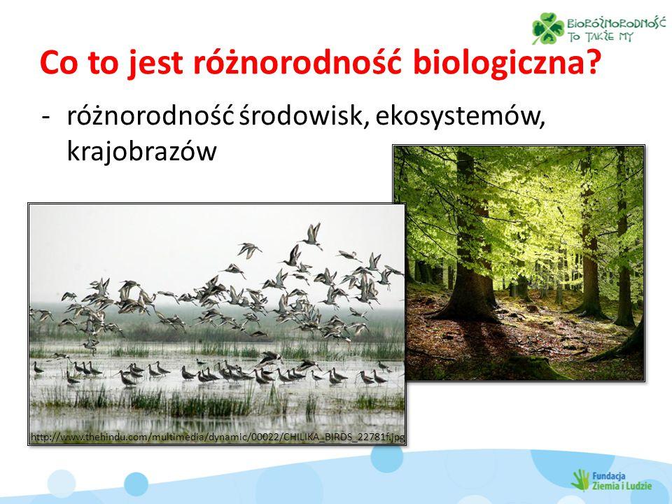 Co to jest różnorodność biologiczna