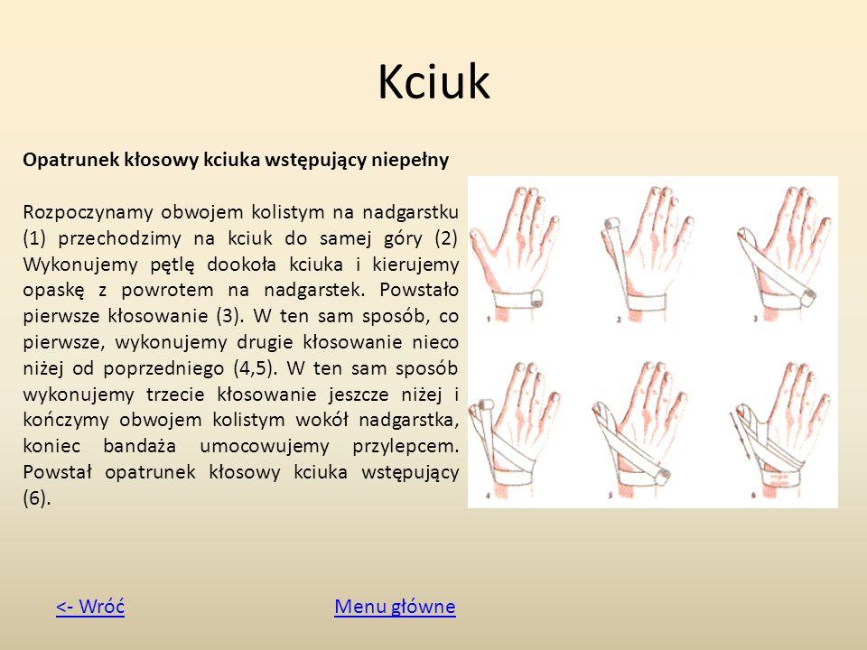 Kciuk Opatrunek kłosowy kciuka wstępujący niepełny