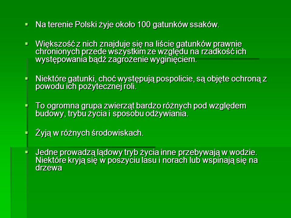 Na terenie Polski żyje około 100 gatunków ssaków.