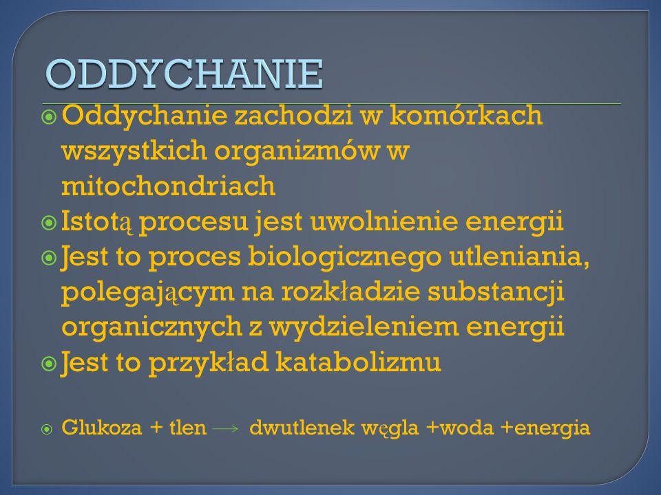 ODDYCHANIE Oddychanie zachodzi w komórkach wszystkich organizmów w mitochondriach. Istotą procesu jest uwolnienie energii.