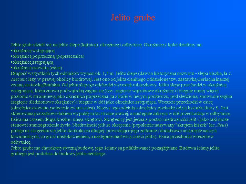 Jelito grubeJelito grube dzieli się na jelito ślepe (kątnicę), okrężnicę i odbytnicę. Okrężnicę z kolei dzielimy na:
