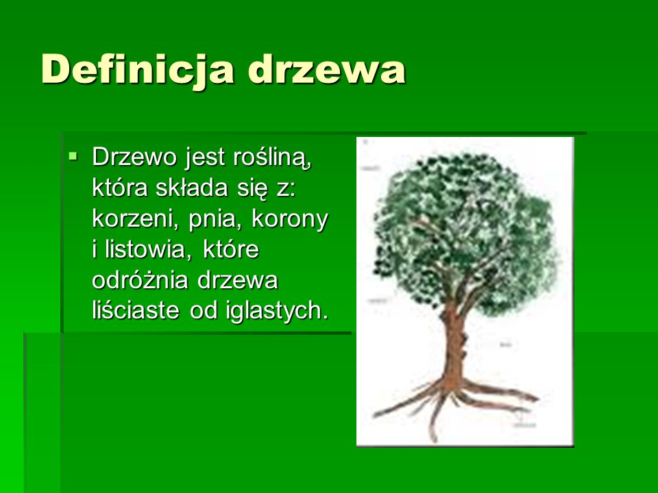 Definicja drzewa Drzewo jest rośliną, która składa się z: korzeni, pnia, korony i listowia, które odróżnia drzewa liściaste od iglastych.