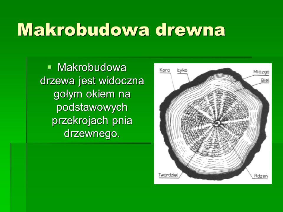 Makrobudowa drewna Makrobudowa drzewa jest widoczna gołym okiem na podstawowych przekrojach pnia drzewnego.