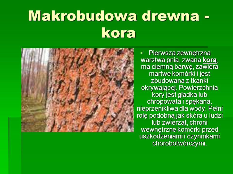 Makrobudowa drewna - kora