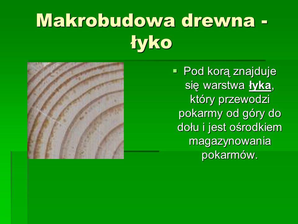 Makrobudowa drewna - łyko
