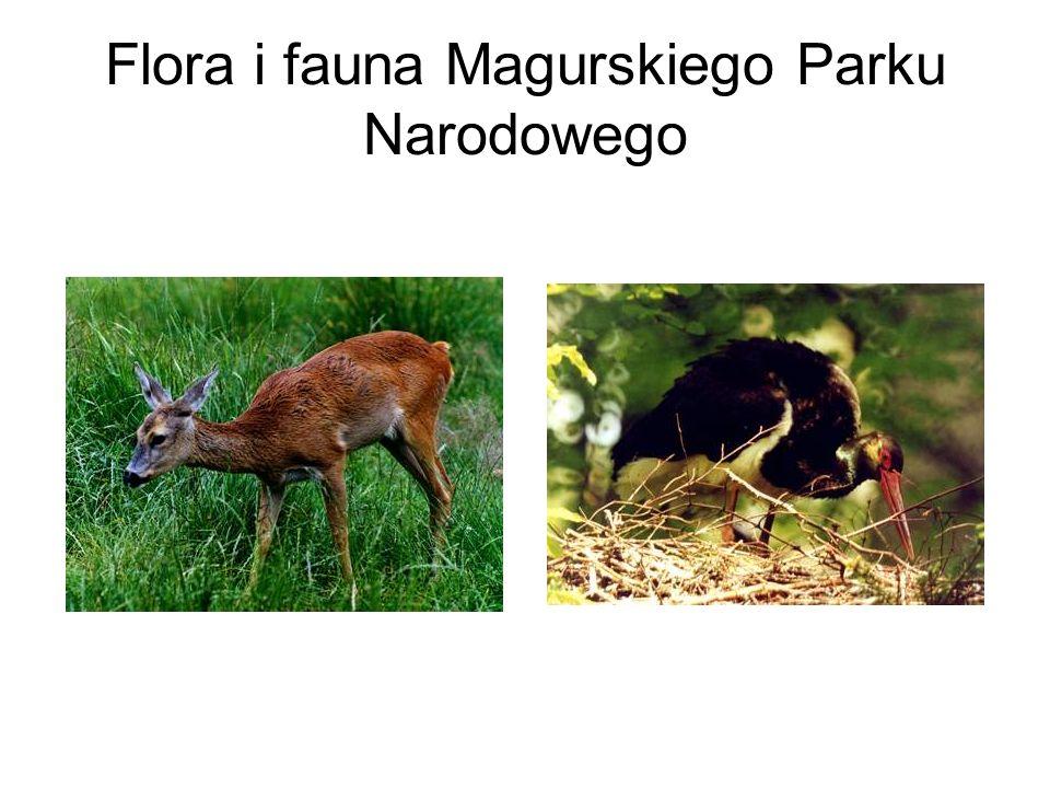 Flora i fauna Magurskiego Parku Narodowego