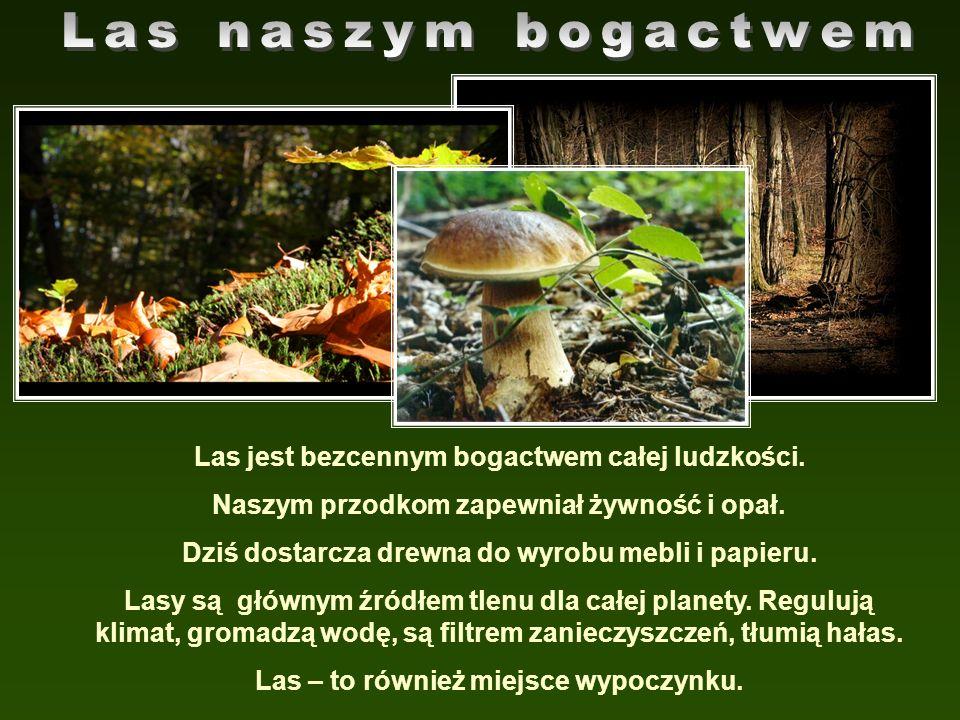 Las naszym bogactwem Las jest bezcennym bogactwem całej ludzkości.
