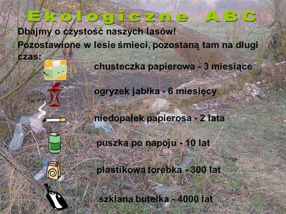 Dbajmy o czystość naszych lasów!