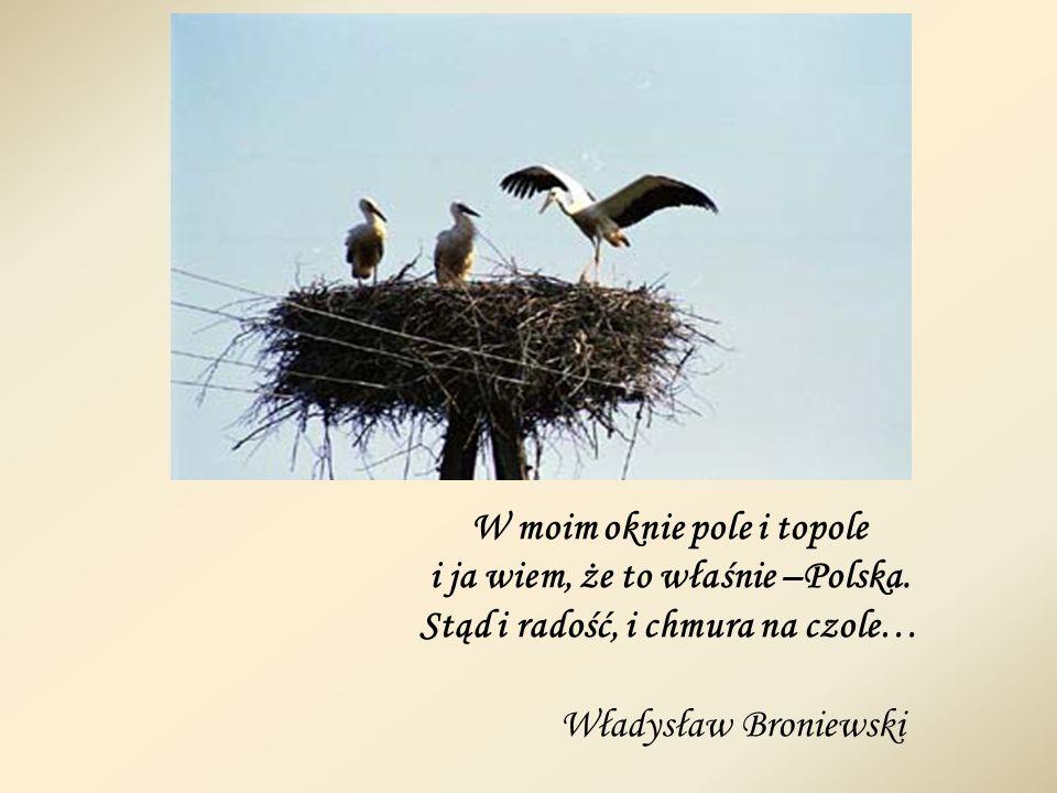 W moim oknie pole i topole i ja wiem, że to właśnie –Polska.