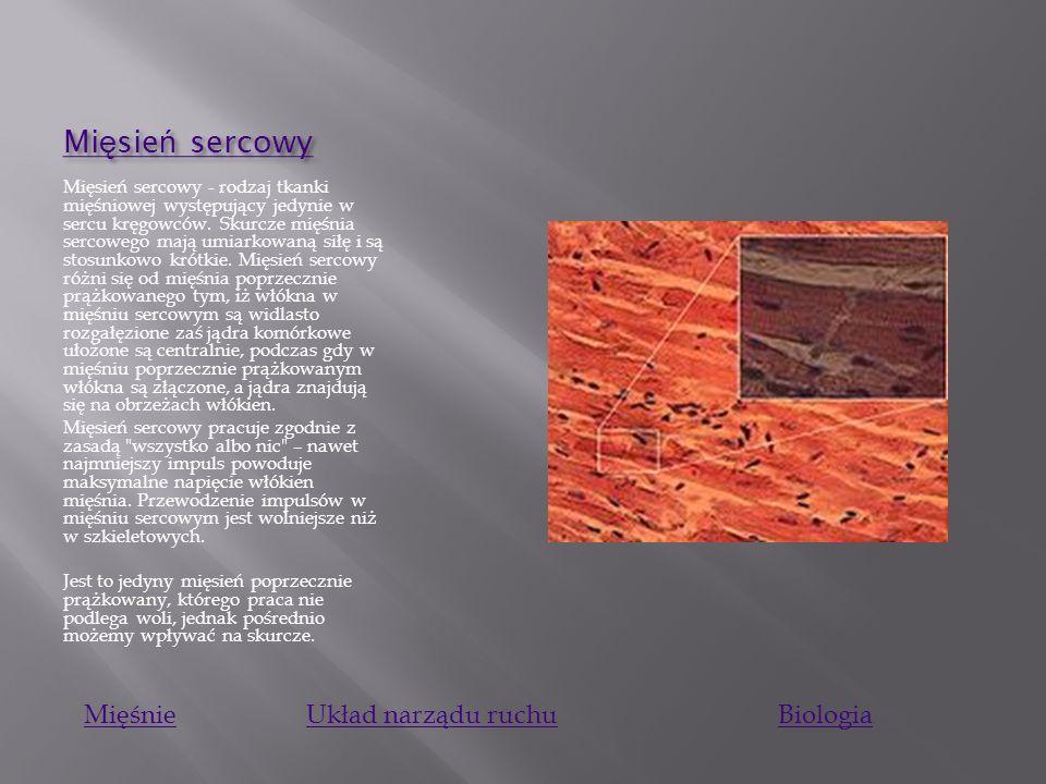 Mięsień sercowy Mięśnie Układ narządu ruchu Biologia