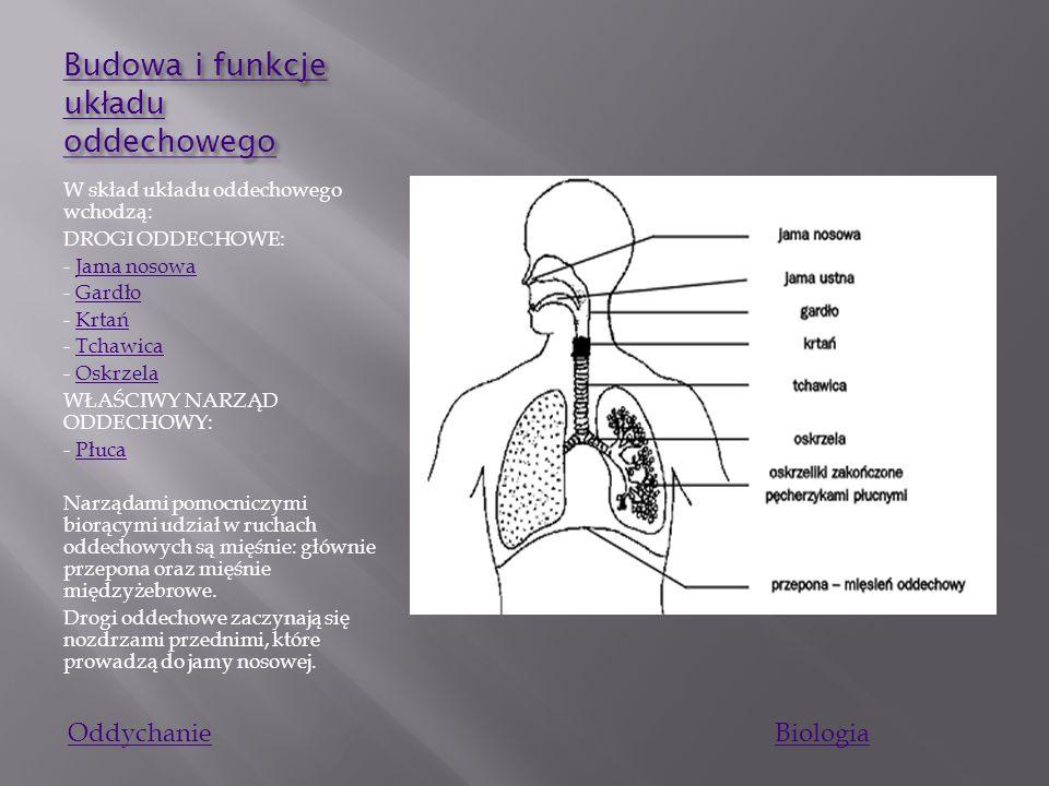 Budowa i funkcje układu oddechowego