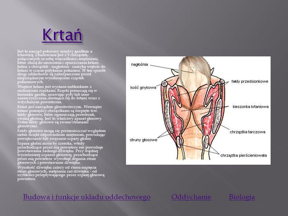 Krtań Budowa i funkcje układu oddechowego Oddychanie Biologia