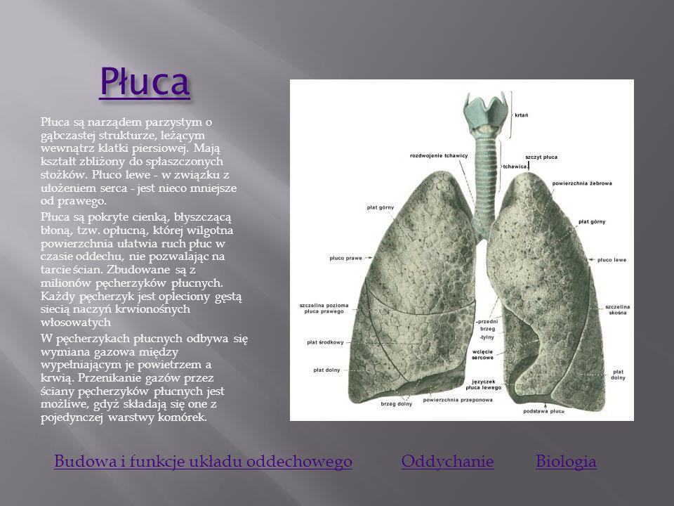 Płuca Budowa i funkcje układu oddechowego Oddychanie Biologia