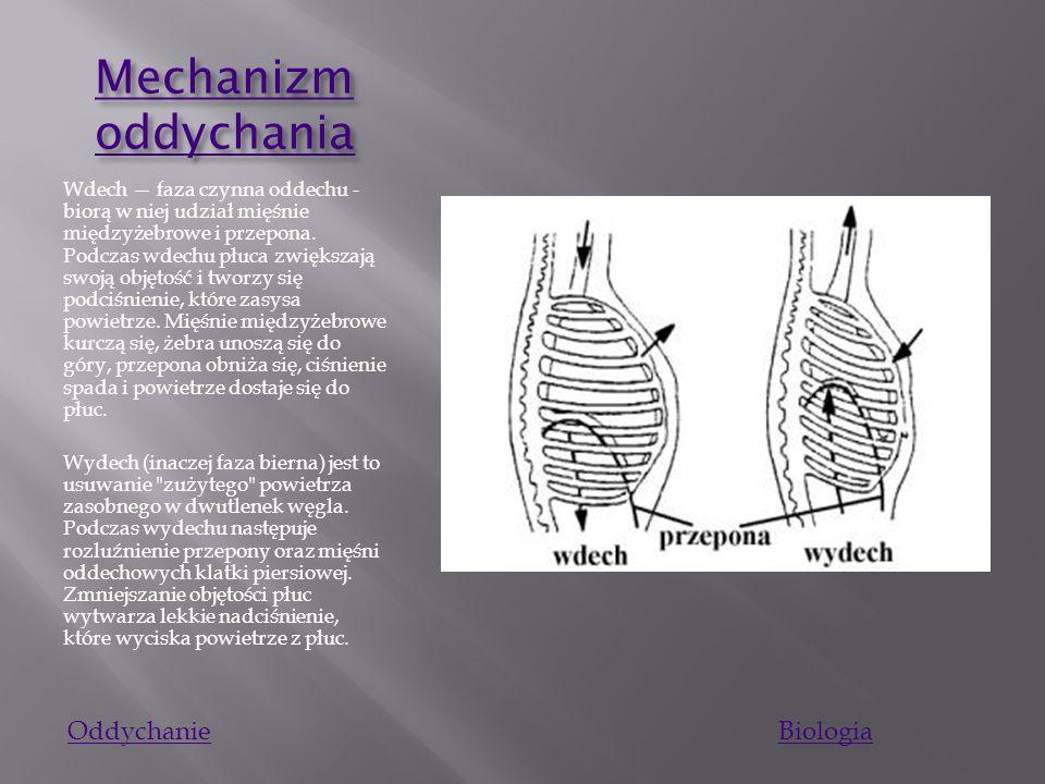 Mechanizm oddychania Oddychanie Biologia