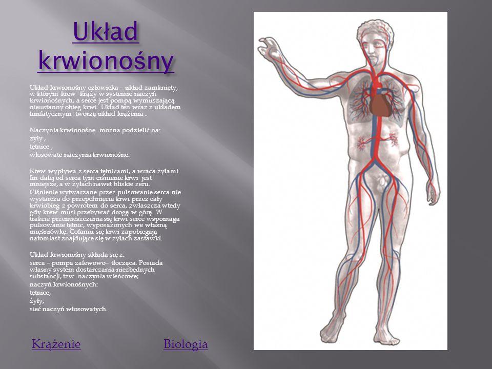 Układ krwionośny Krążenie Biologia