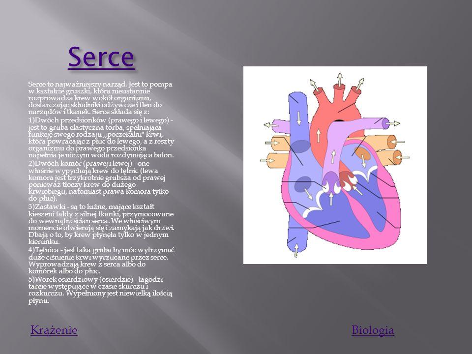 Serce Krążenie Biologia