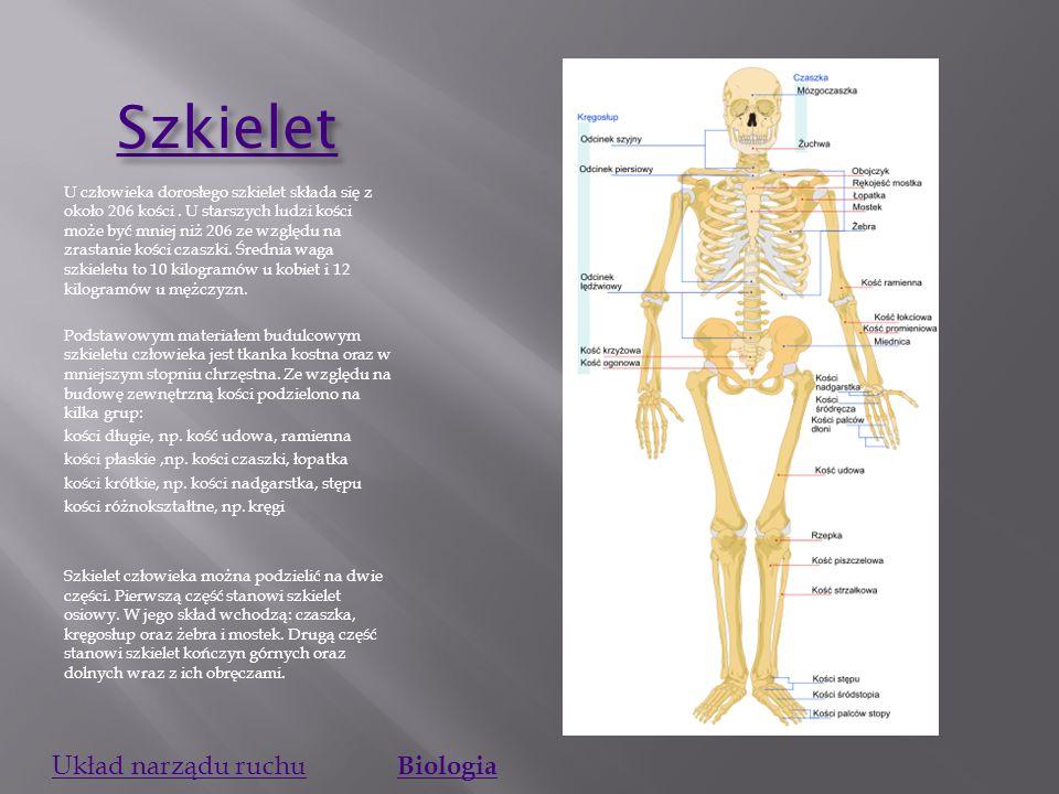 Szkielet Układ narządu ruchu Biologia