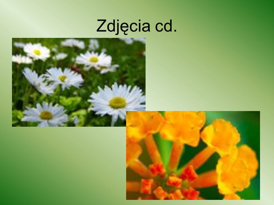 Zdjęcia cd.