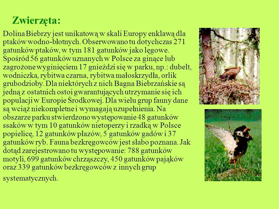 Zwierzęta: